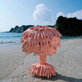 2005二つ珊瑚.jpg
