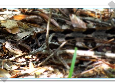 I don't like snakes or gators! (Okefenokee Preserve)