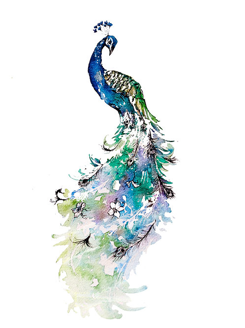 The Elegant Peacock Print A3