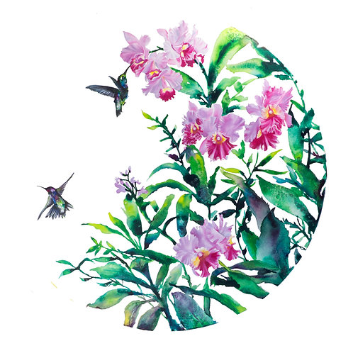 Hummingbirds and Orchids Print