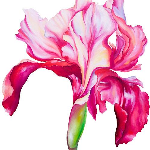 Iris Print A3