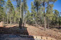 Back Forest