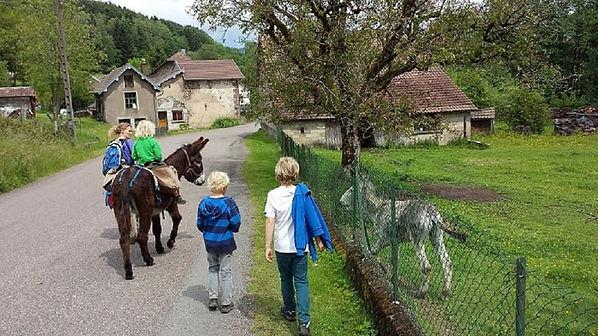 ezels, ezel, meerdaagse tocht, trektocht