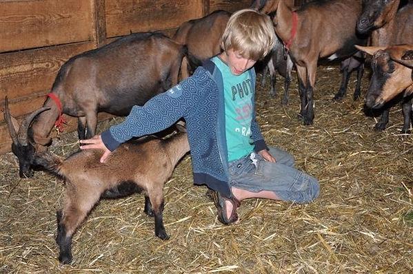Geiten, kind, stal, boerderij