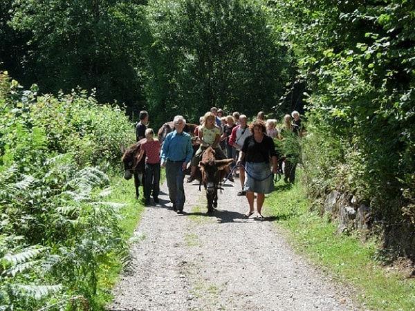 grote ezeltocht, groepsezeltocht, wandelen