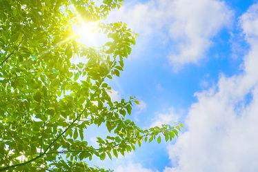 新緑の桜の木と青空と光