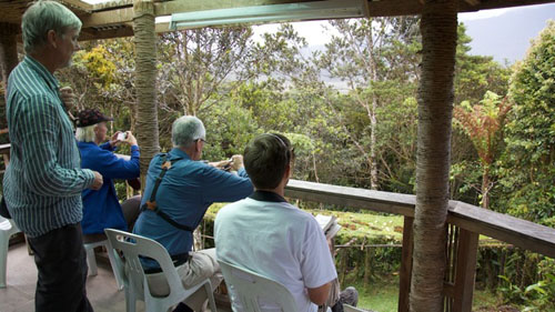veranda birding