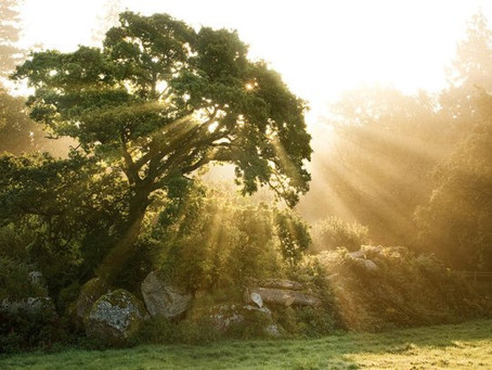 Message from the Trees: Find Your Grove of Support