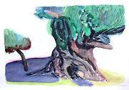 olive VI watercol 30x45cm.jpg