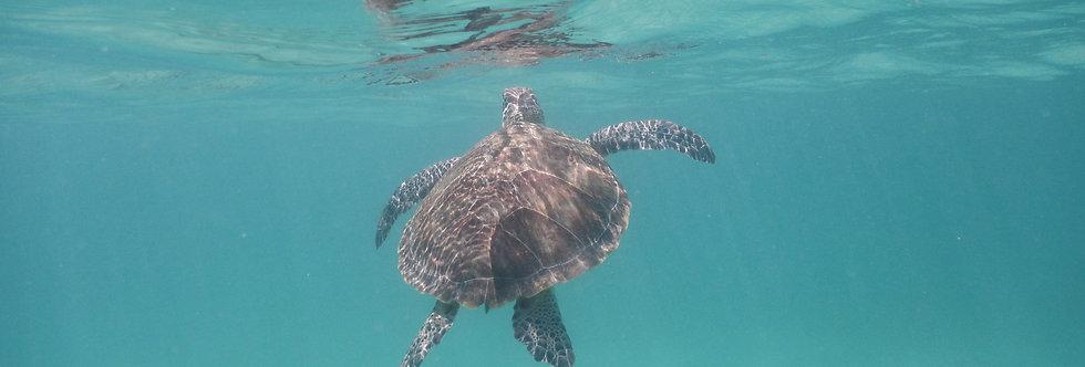 Riviera Maya - Monitoreo de tortugas: 1 semana voluntariado
