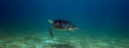 Turtle Conservation MRCI 7.jpg