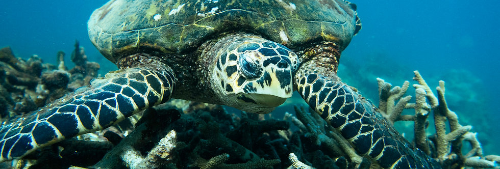 Tortugas, Costa Rica: Media semana de voluntariado