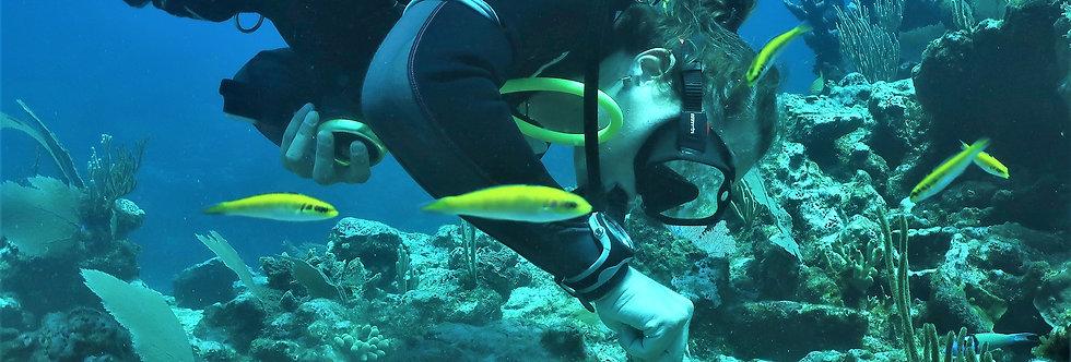 Riviera Maya - Restauración de arrecifes: Seguro