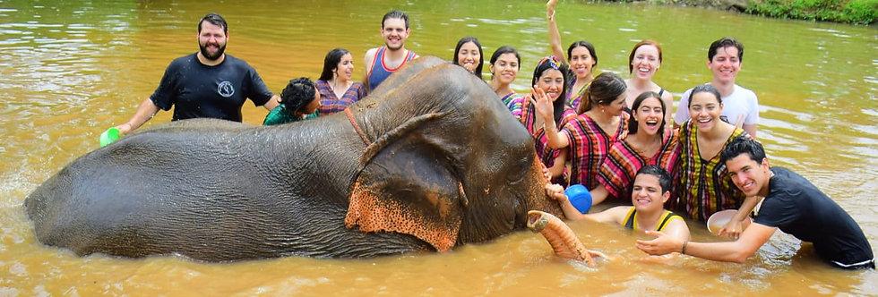 Tailandia Elefantes: Pago de Inscripción