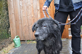 Neues aus dem Tierheim Cuxhaven: Jettes traurige Geschichte