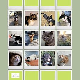 Tier der Woche in Cuxhaven: Wer wurde vermittelt, wer ist noch im Tierheim?