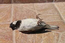 Tote Vögel nicht anfassen!