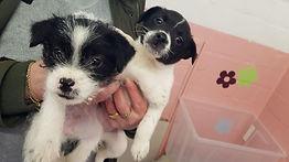 Gefangen in einer Plastikbox: Zwei Hundewelpen in Cuxhaven ausgesetzt