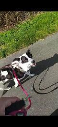 Straßenhund Rico hatte es nicht immer leicht