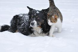 Haustiere draußen vor Kälte schützen