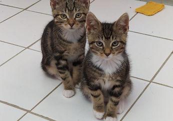 Katzenbabys 1.jpeg