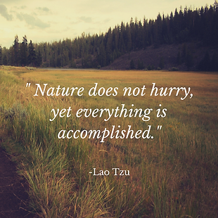 Nature-does-not-hurry-yet-everything-is-