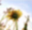 Screen Shot 2020-04-14 at 19.35.52.png