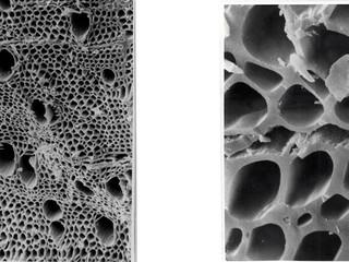 炭そだちの顕微鏡写真。