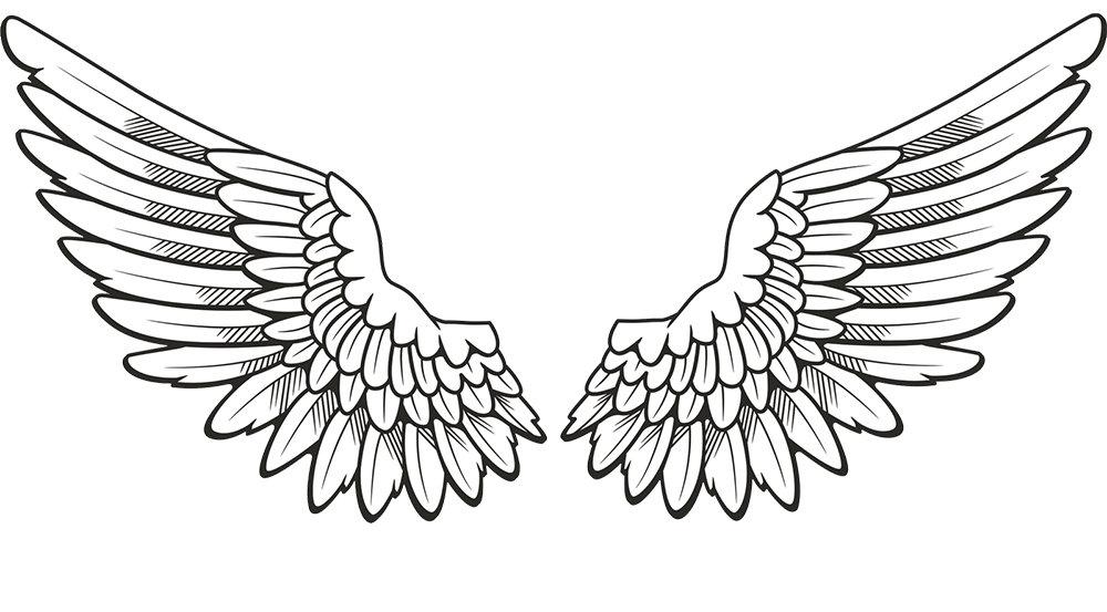 wings jpeg.jpg