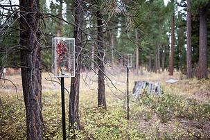 Tree Talk, Blackfoot Pathways Sculpture in the Wild, Lincoln MT