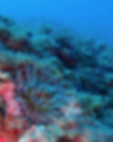 biologie sous marine