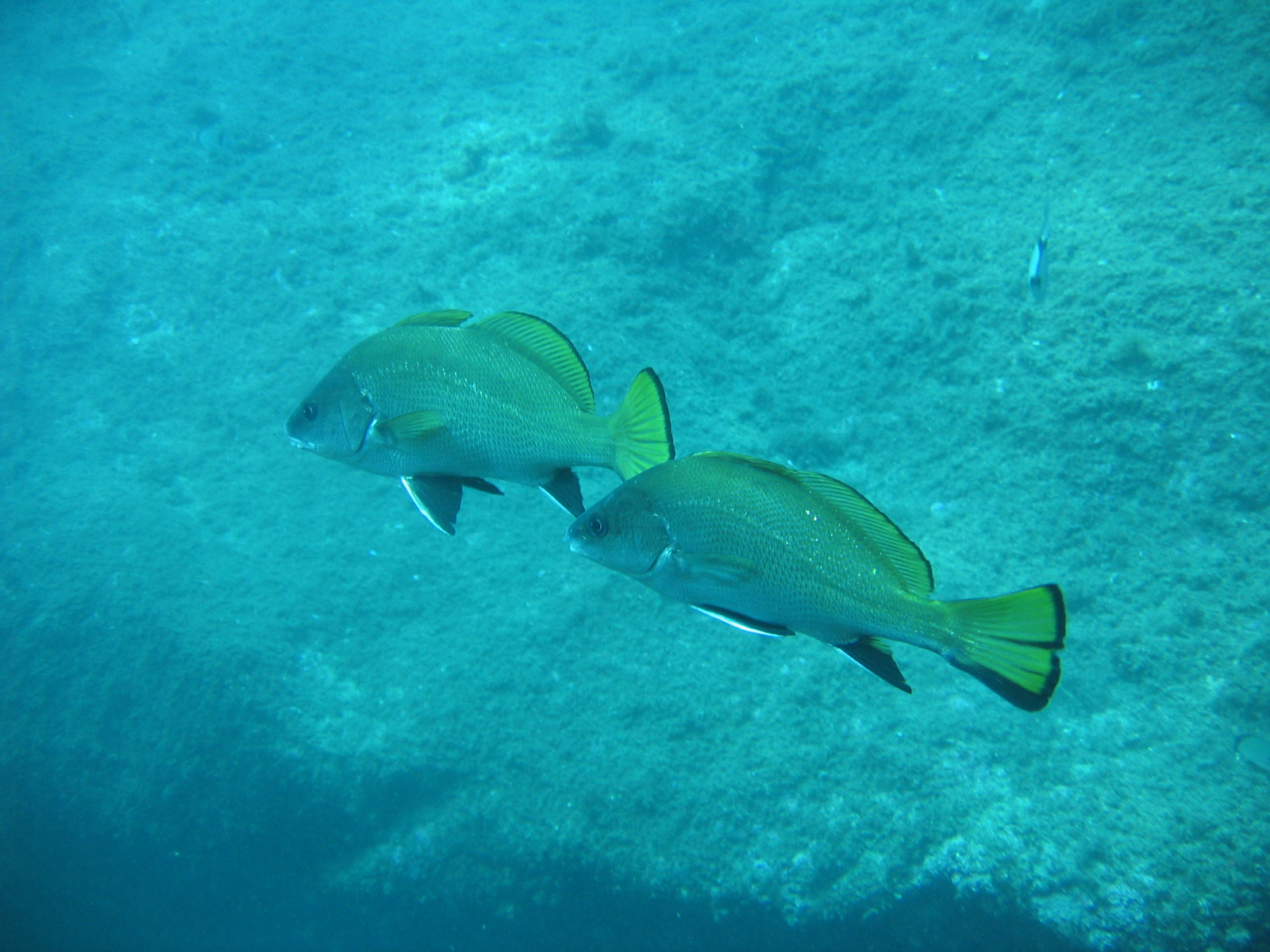 Corbs - Aquablue - Banyuls-sur-mer
