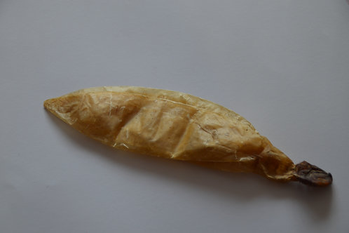 Kälberblase ganz 30-35cm Stück