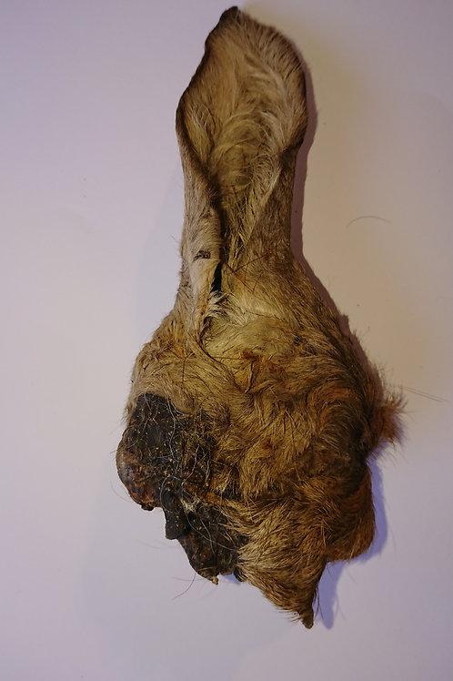 Hirschohr mit Fell und Muschel