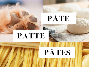 Patte, Pâte, or Pâtes in French?