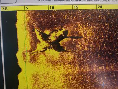 Sea Hunt Surveys International Recovers Missing Plane