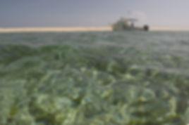 Sea Hunter Bahamas_edited_edited.jpg