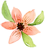 island-lined-coral-flower.png