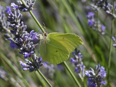 ¿Por qué las mariposas son importantes?