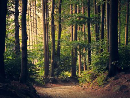 Día Internacional de los Bosques - la importancia de su conservación