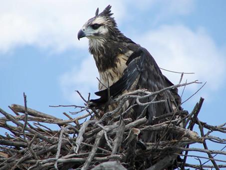Conservación de las aves rapaces en Argentina
