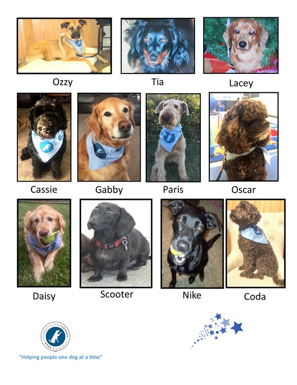 All our CTDS dogs are Rock stars PNG 2 H