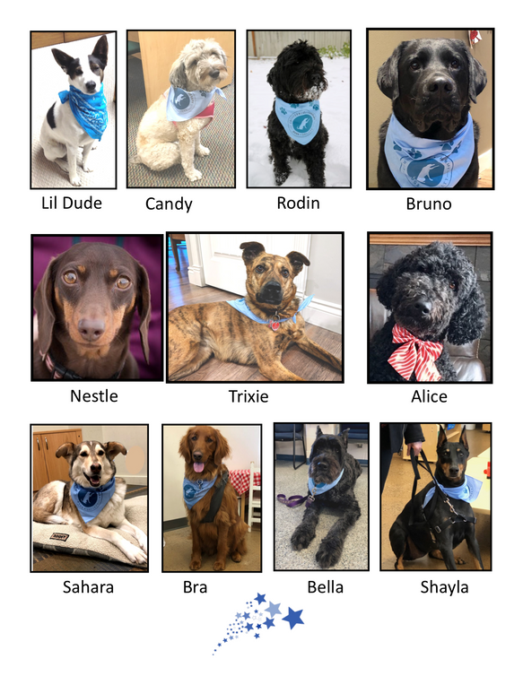 All our CTDS dogs are Rock stars PNG 4 H
