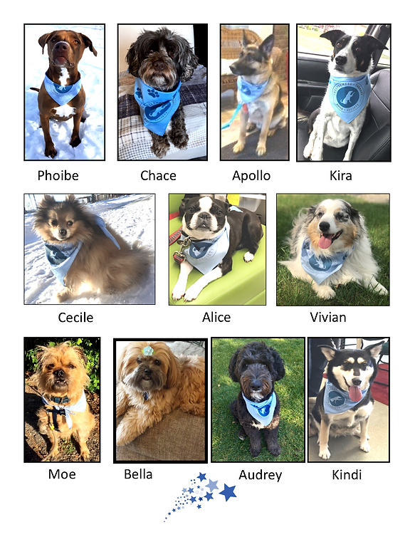 All our CTDS dogs are Rock stars PNG 3 H