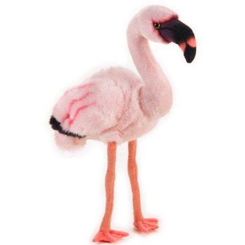 Flamingo Natgeo