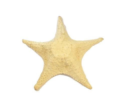 Estrela do Mar P