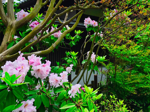 Celebrating earth day remembering Japan