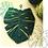 Thumbnail: Macrame Monstera Leaf Kit