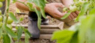 Home Farming Solutions - Balkon- und Terrassengestaltung - Stadtgarten - Urban Gardening - Online-Shop