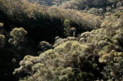 brocoli forest